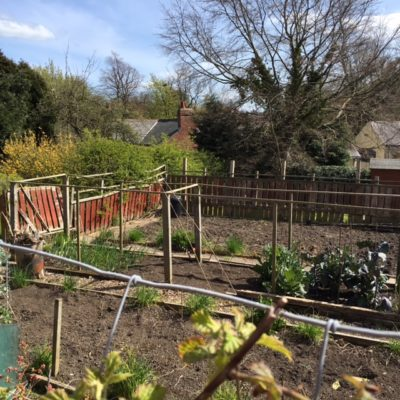 St Mary's Field Allotments
