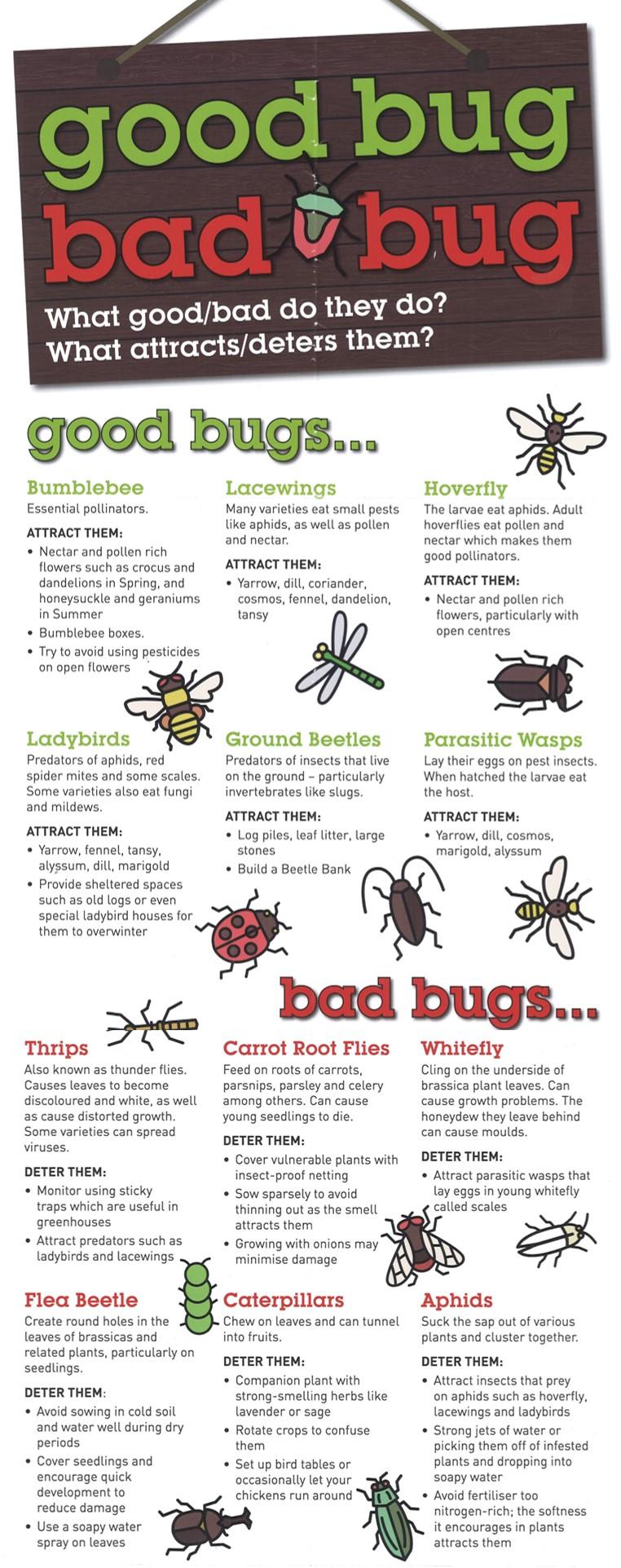 Good Bug Bad Bug Poster